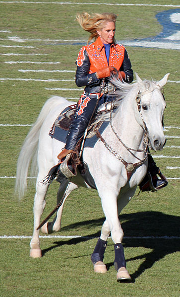 This is Thunder - the Bronco's mascot (image from Wikipedia.com)