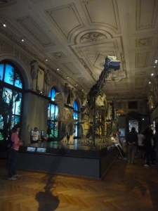 Just your average dinosaur gallery?